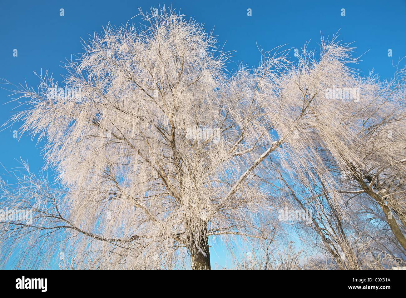 Frostigen Bäume Stockbild