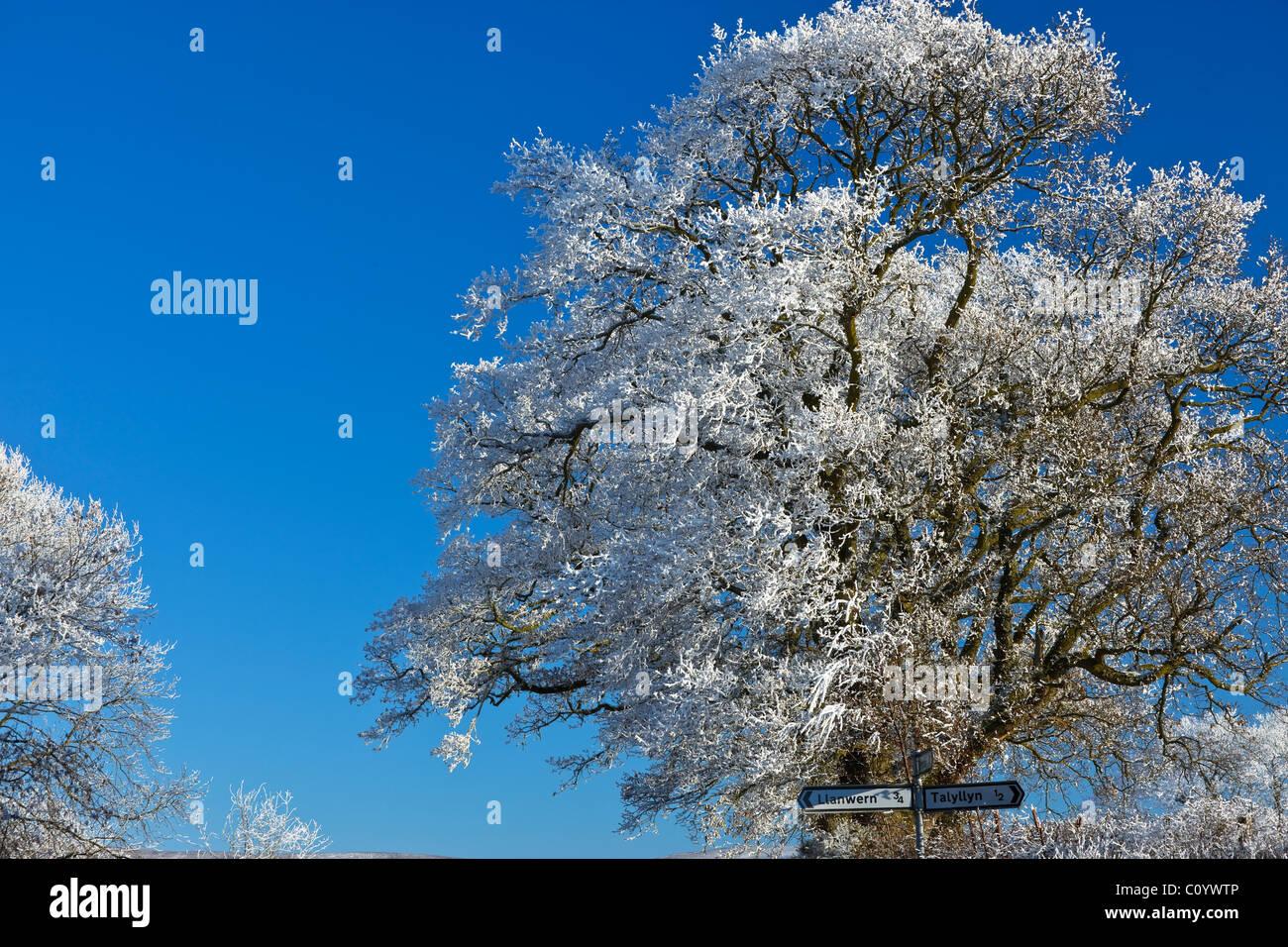 Baumkronen Brecon Beacons Powys Wales im winter Stockbild