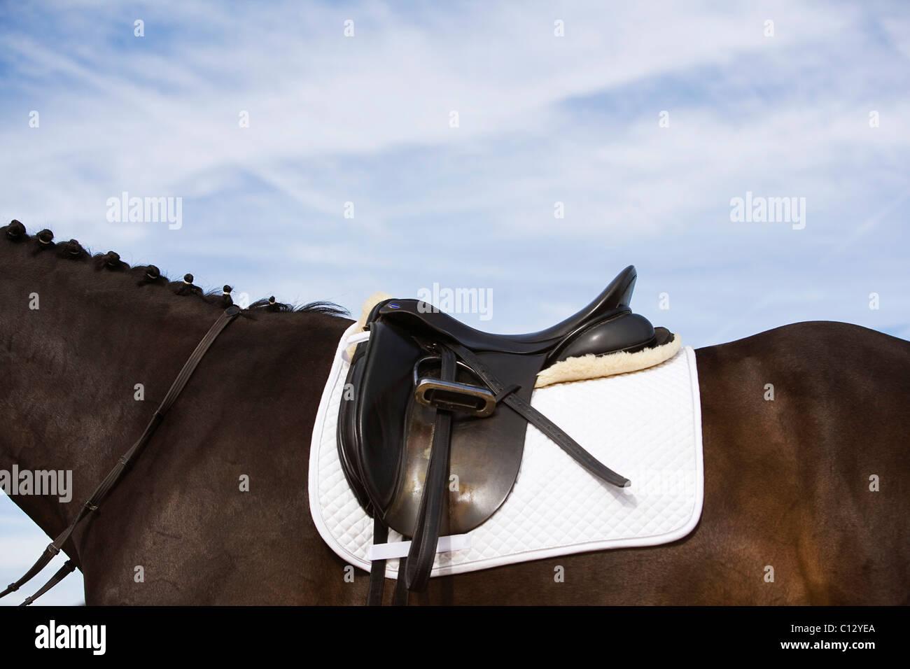Seitenansicht des gesattelten Pferd Stockbild