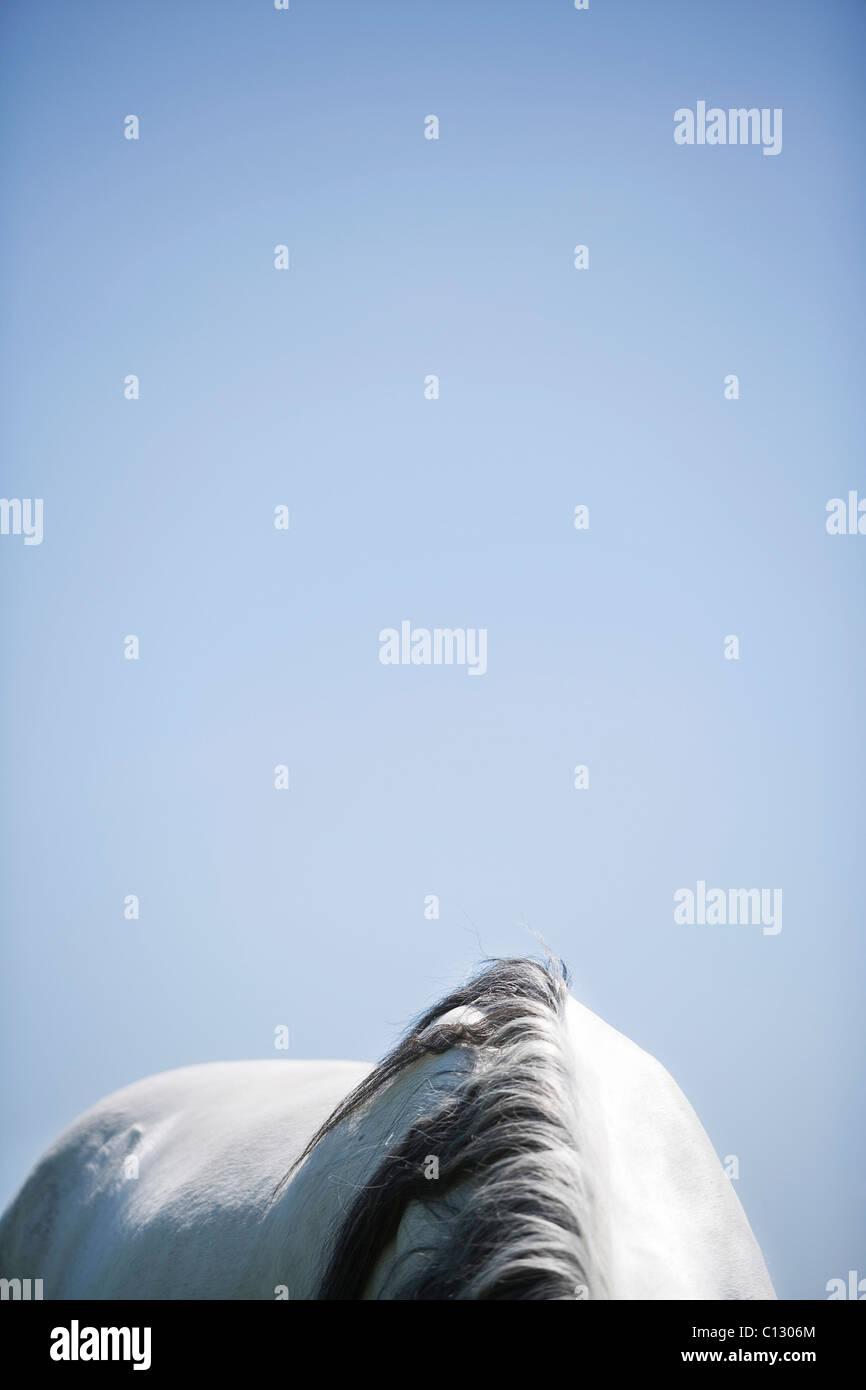 Detail des Schimmels Stockbild