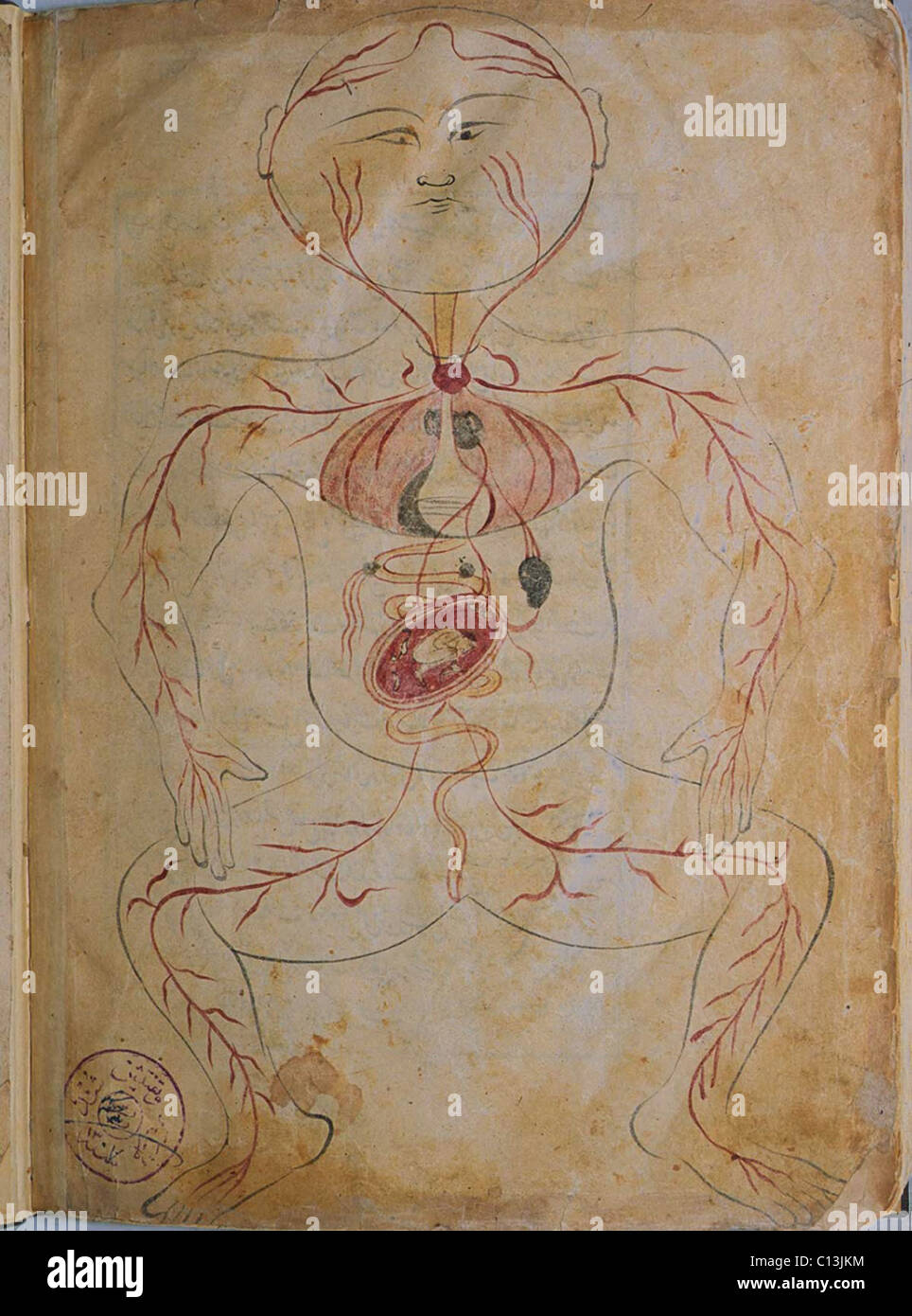 Historical Anatomy Stockfotos & Historical Anatomy Bilder - Alamy