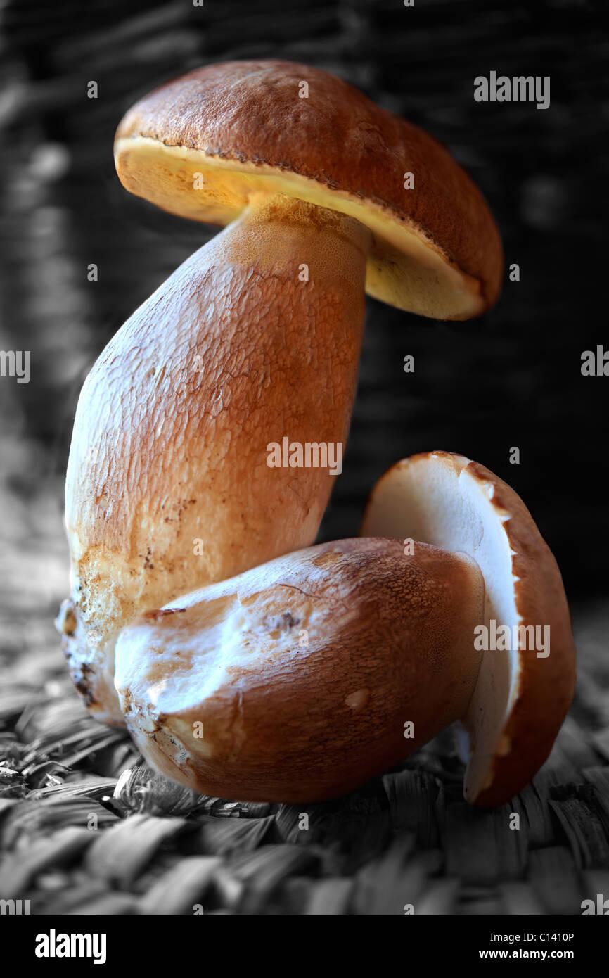 Ganze frische Steinpilze wilde Pilze Stockbild