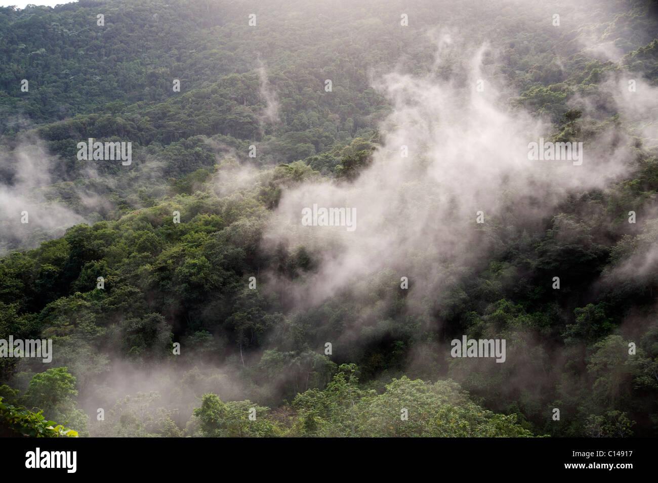 Amazonas, Regenwald bedeckt, im Nebel, Brasilien Stockbild