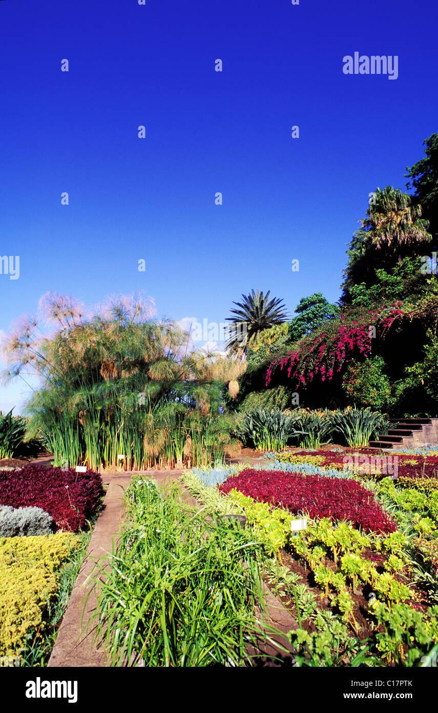 Portugal, Madeira Insel, botanische Garten von Funchal Stockbild