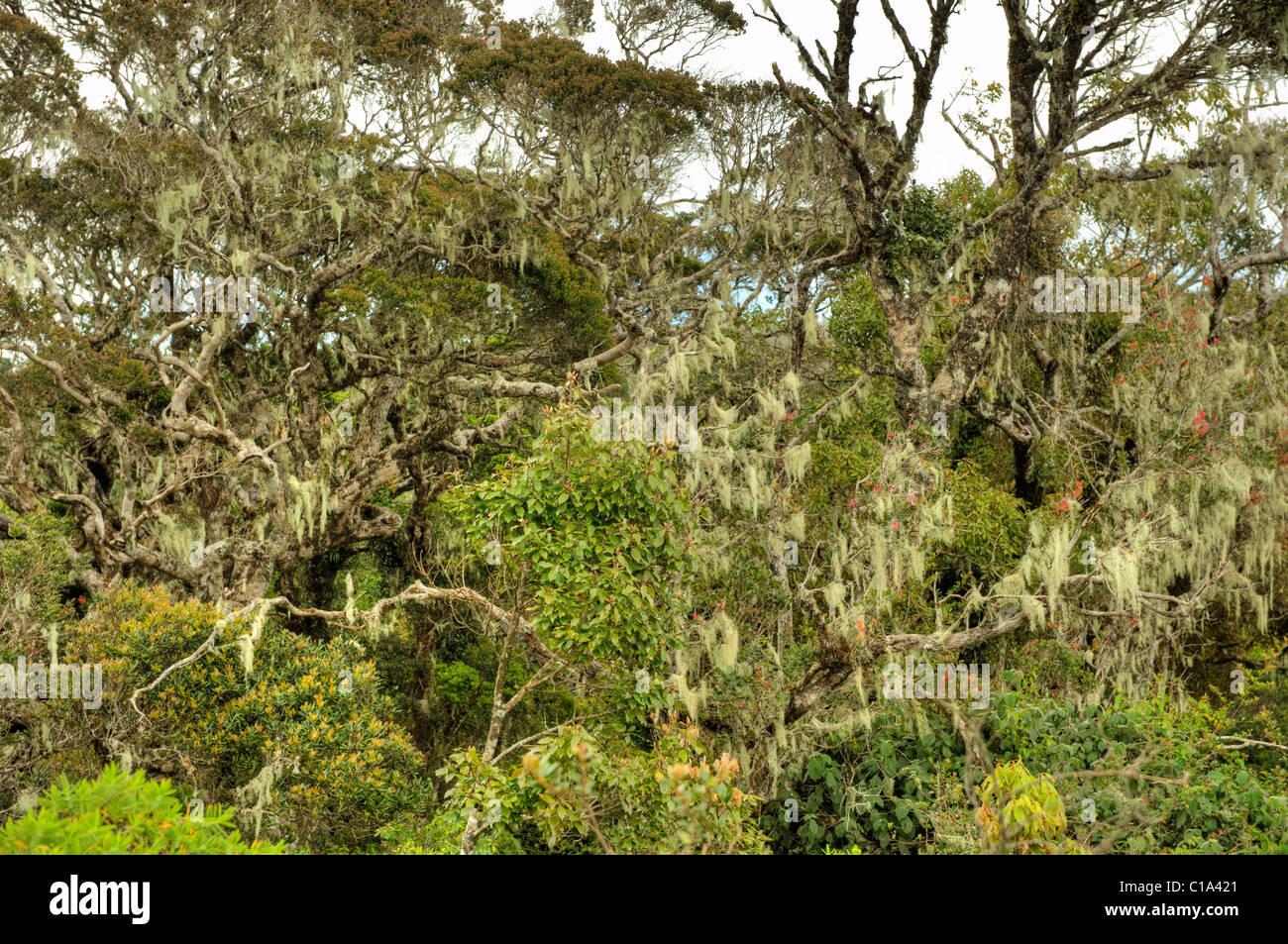 Sri Lanka montane Regenwald Stockbild