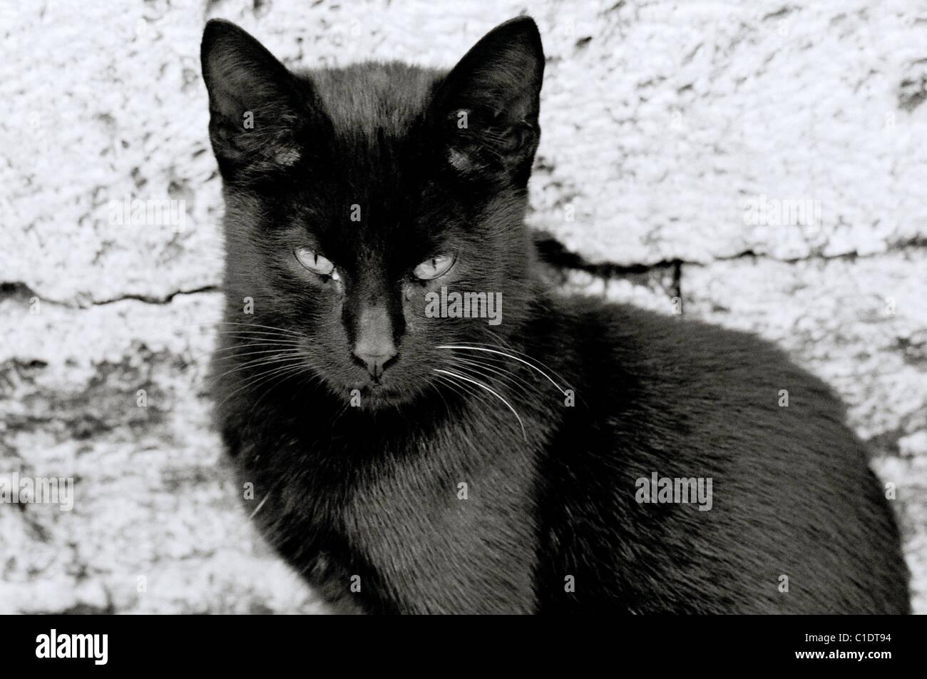 Dokumentarische Fotografie - finstere Suche schwarze Katze in Istanbul in der Türkei Naher Osten Asien. Katzen Stockbild