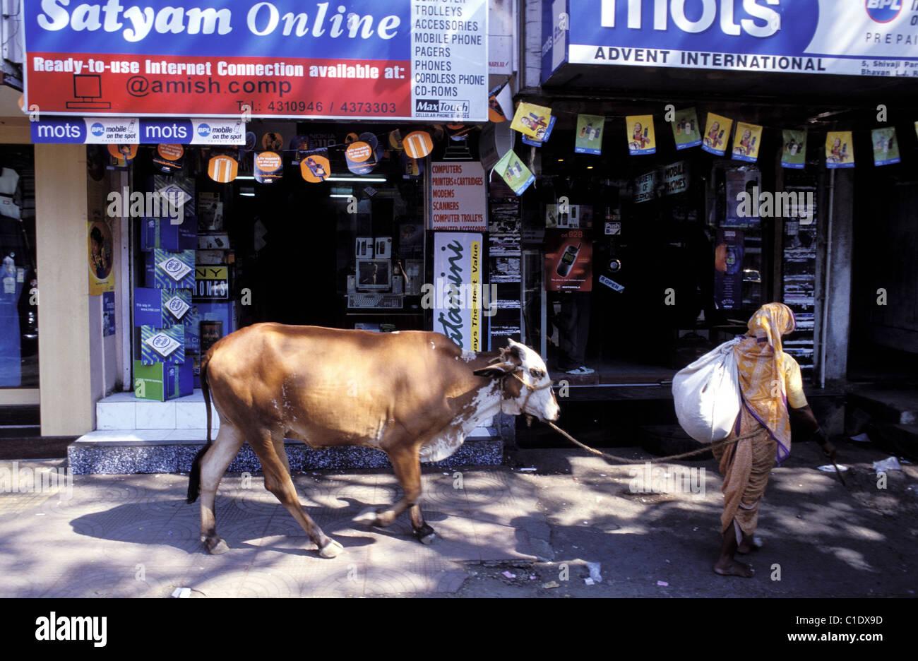 Indien, Maharashtra, Bombay (Mumbai) Kuh gekrönt vor einem Geschäft von einem Computer-shop Stockfoto