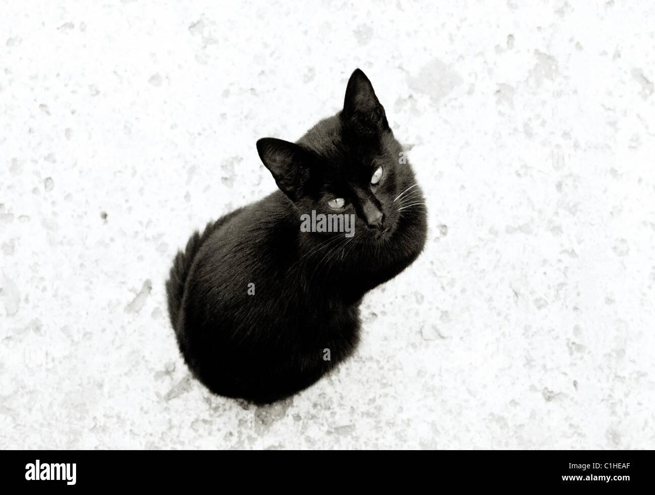 Dokumentarische Fotografie - Geheimnisvolle schwarze Katze in Istanbul in der Türkei Naher Osten Asien. Katzen Stockbild