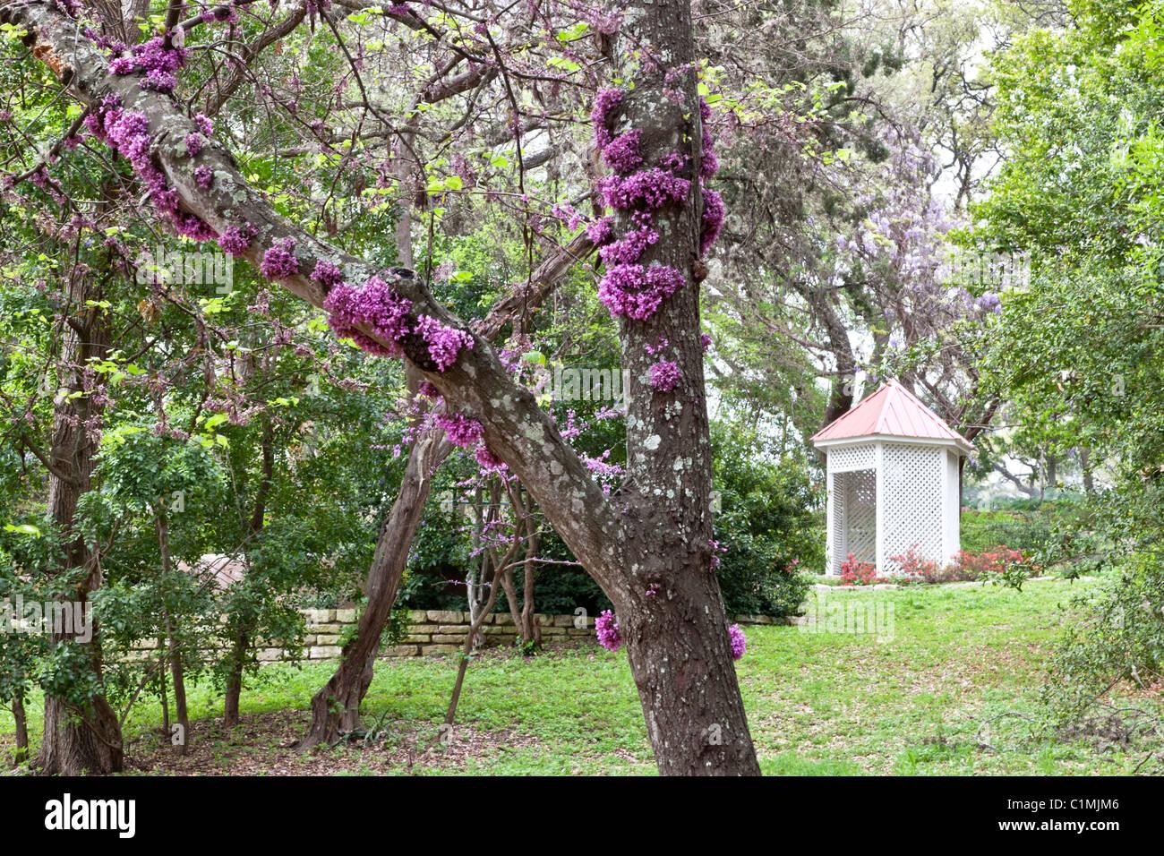 Zilker botanischen Garten Stockbild
