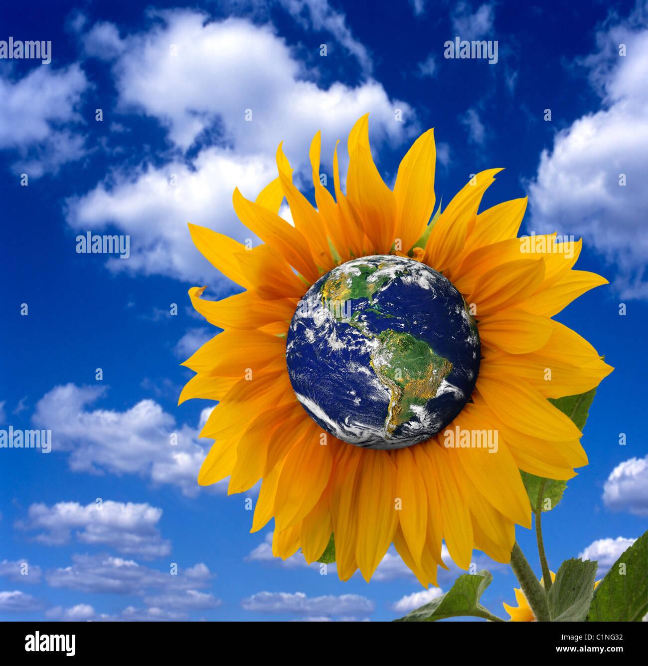 Erde wie eine Sonnenblume, die Erde als einen lebendigen Organismus darstellt. Stockbild
