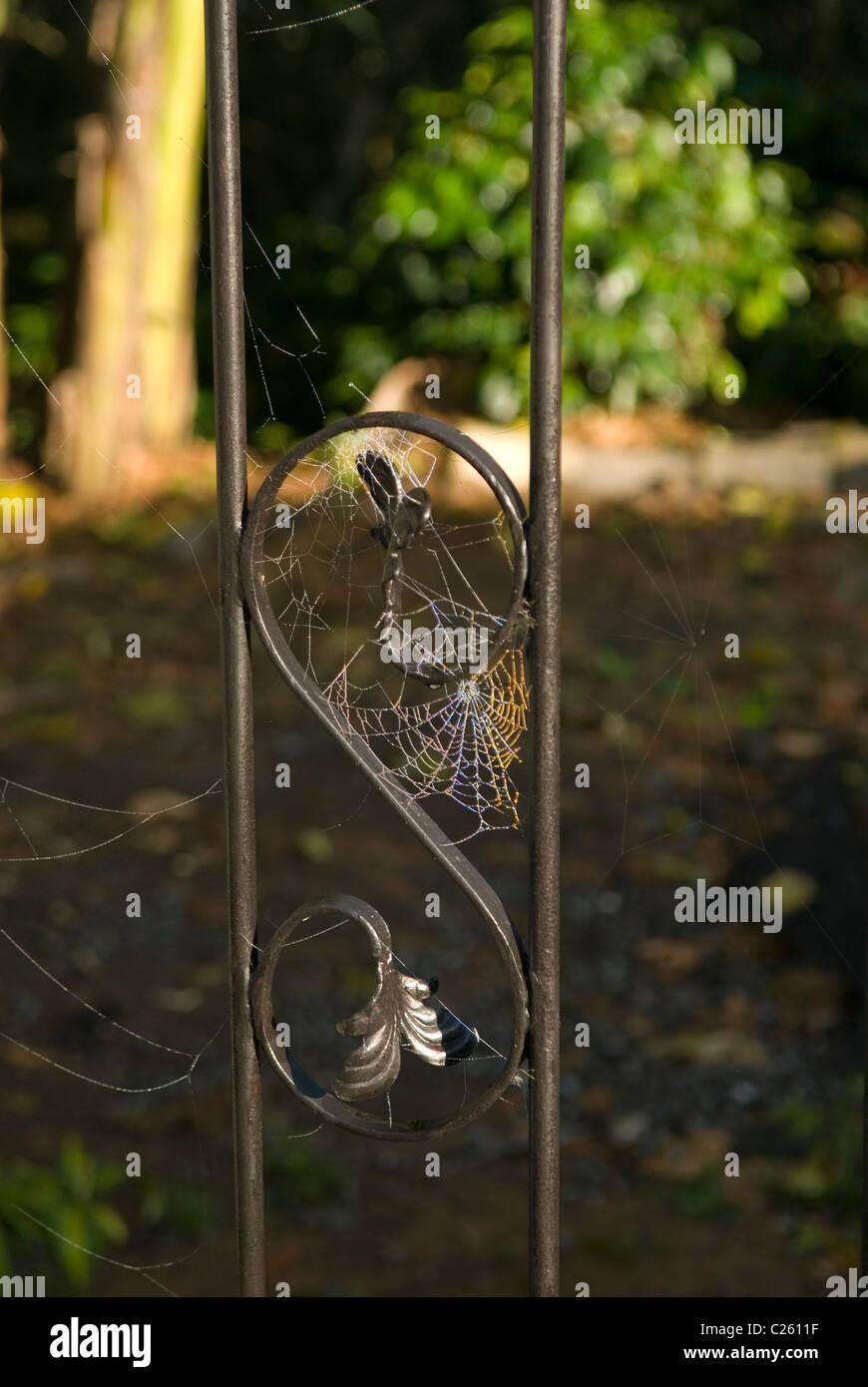 Regenbogen In Der Tau Auf Das Spinnennetz Auf Dem Zaun Stockfoto