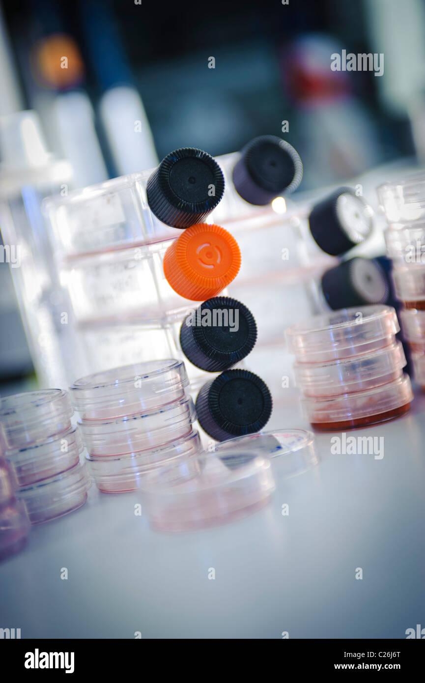Zellkulturflaschen und Petrischalen in Science Lab Labor Mikrobiologie Stockbild