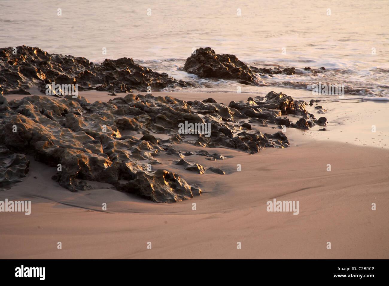 Holprige Koralle Felsen am Strand. Stockbild