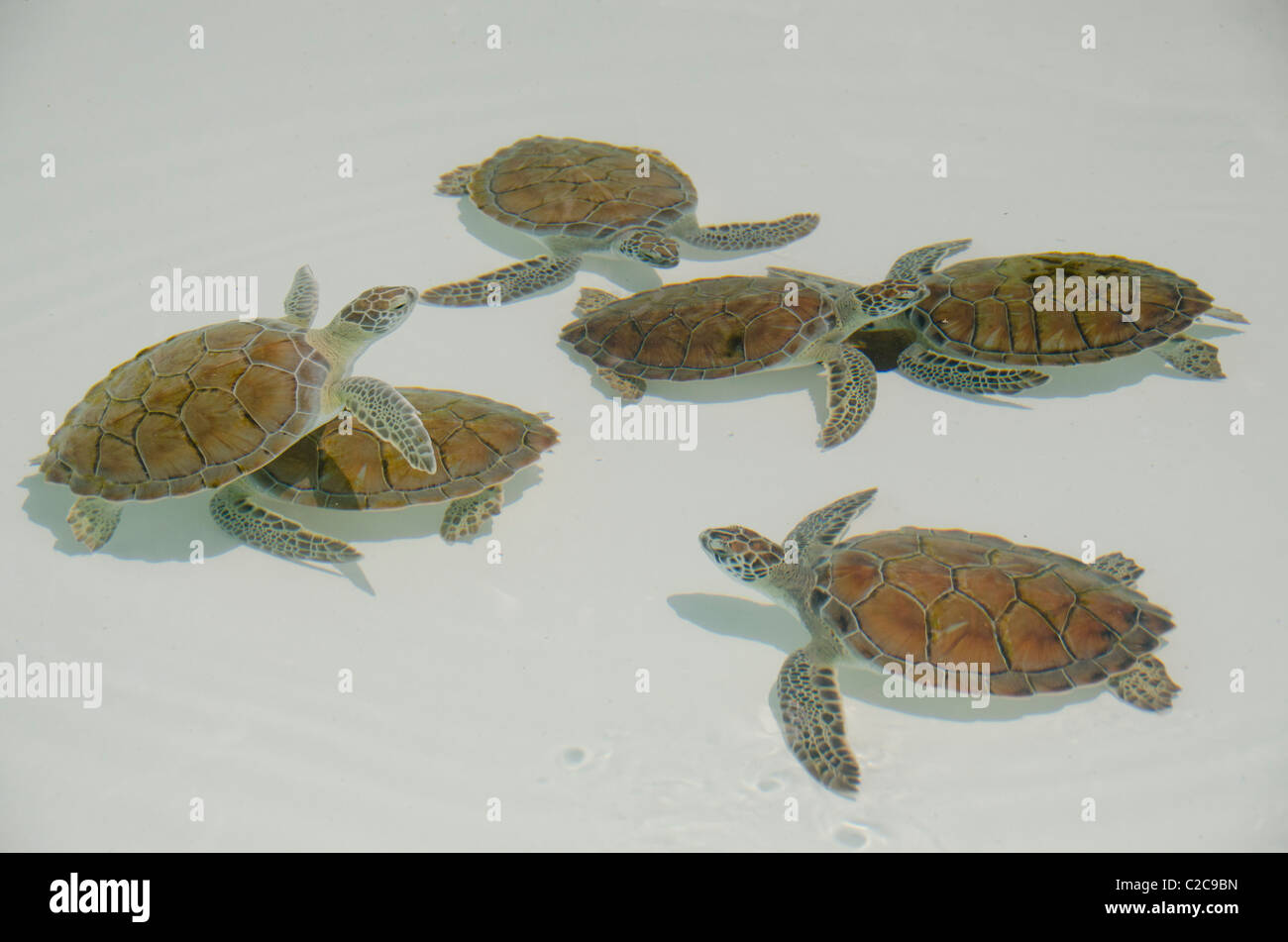 Schön Süsse Meeresschildkröte Färbung Seite Ideen - Beispiel ...