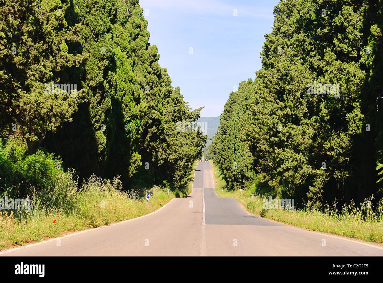 Zypressenallee Laengste saufen - längste Zypressenallee aus Italien 03 Stockbild
