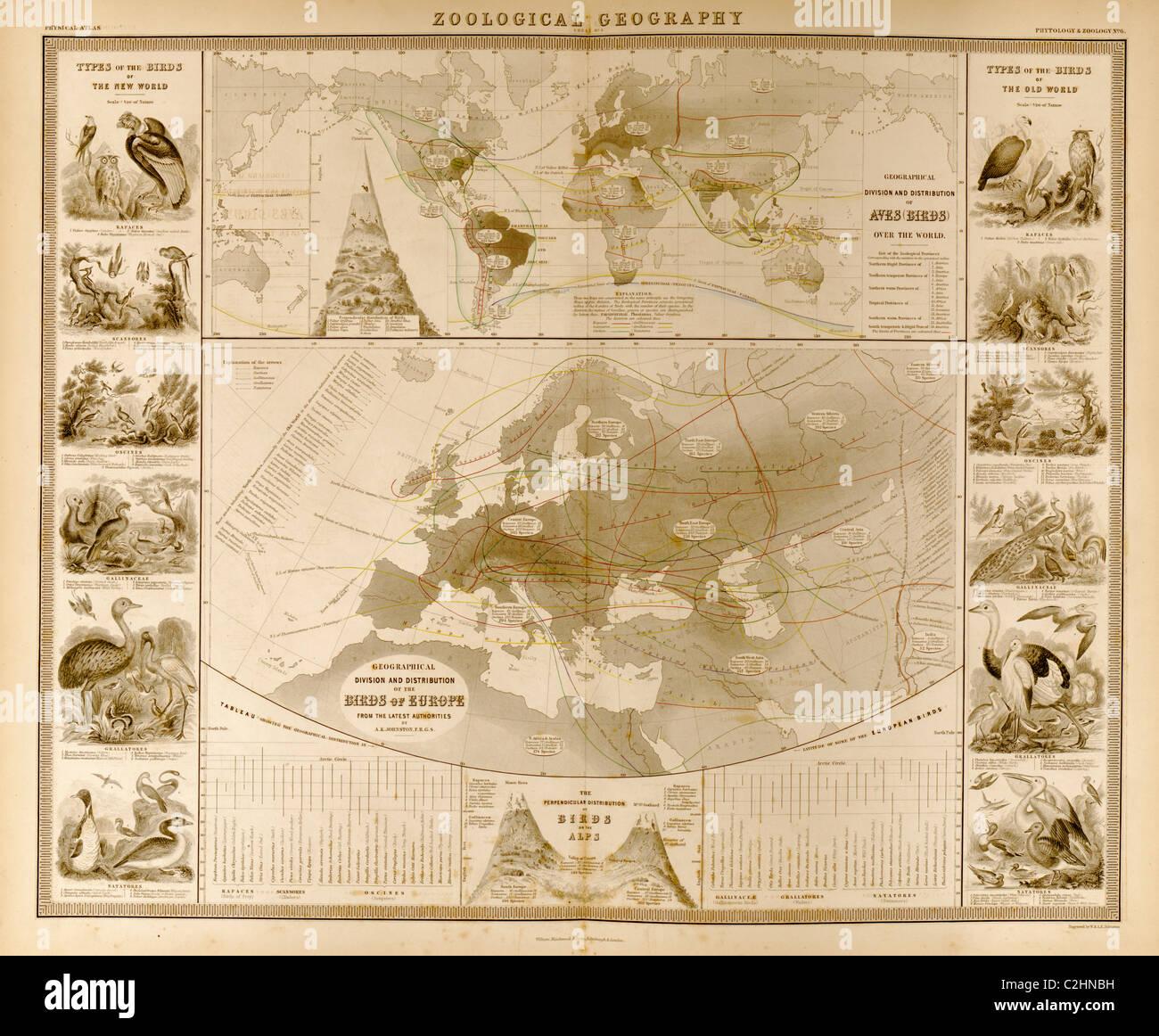 Zoologische Geographie; Birds of the World Stockbild