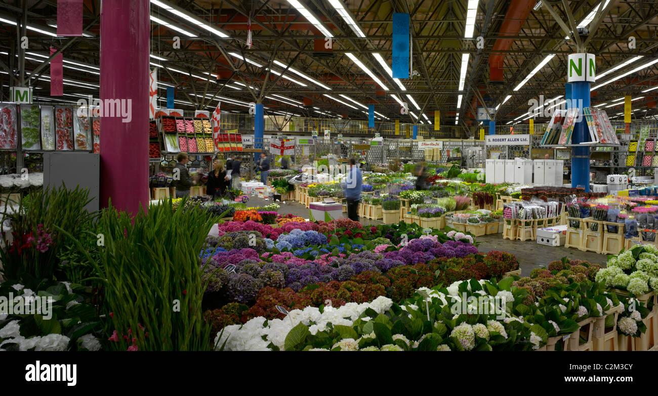 neue londoner covent garden flower market, neun ulmen stockfoto