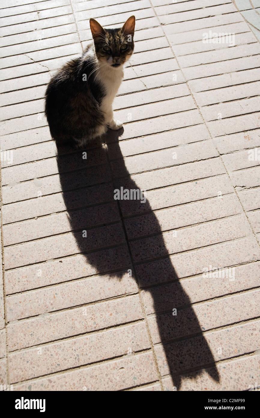 Katze und seinen langen Schatten, Essaouira, Marokko Stockbild