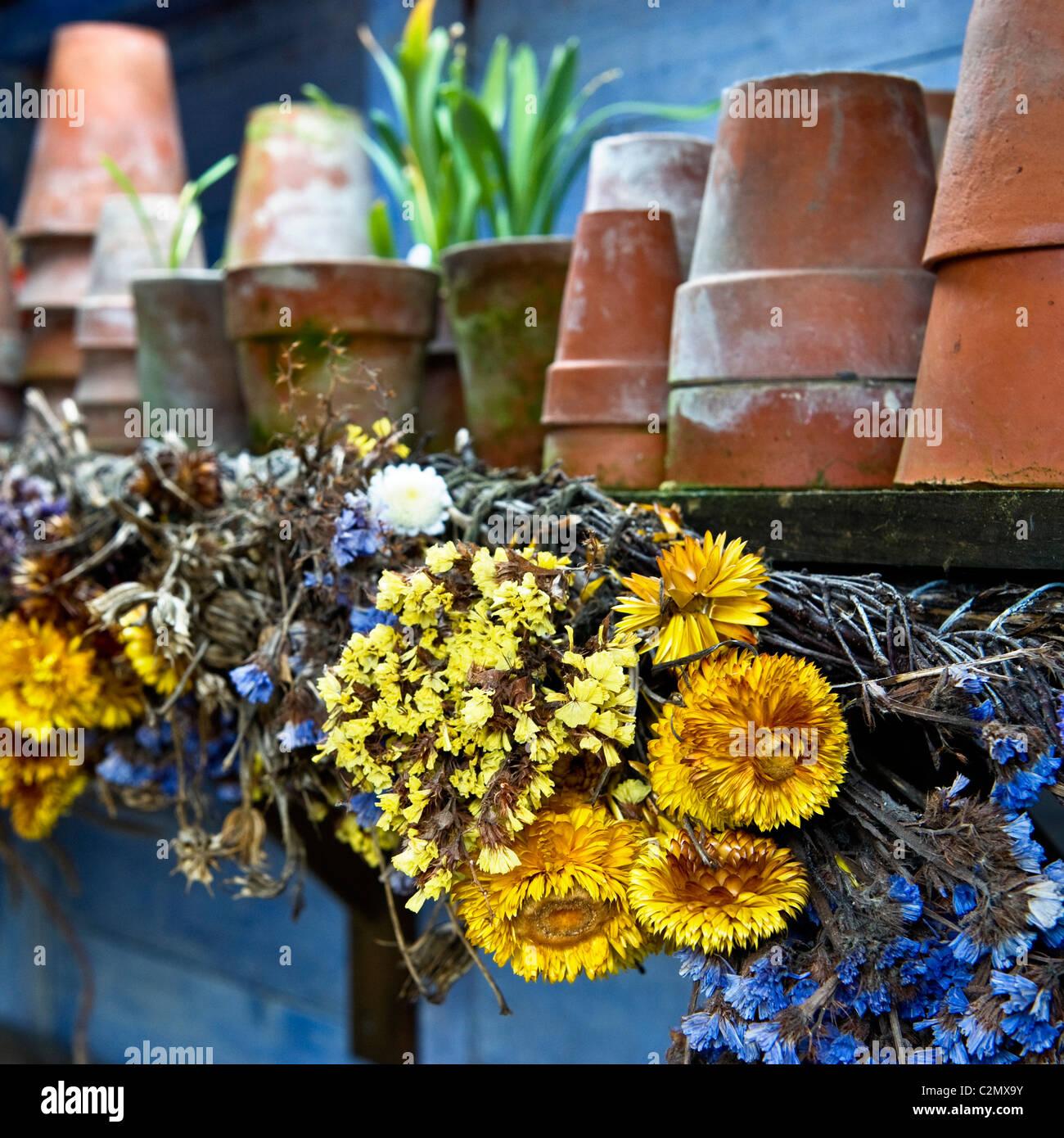 Getrocknete Blumen in alten Potting Shed Stockbild