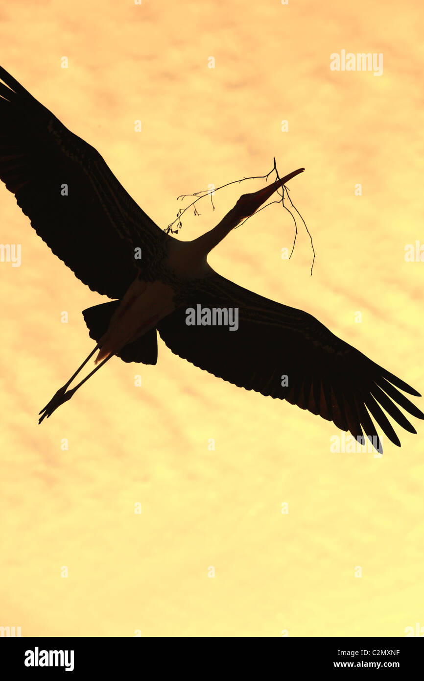 Bemalte Storch Andhra Pradesh in Indien Stockbild