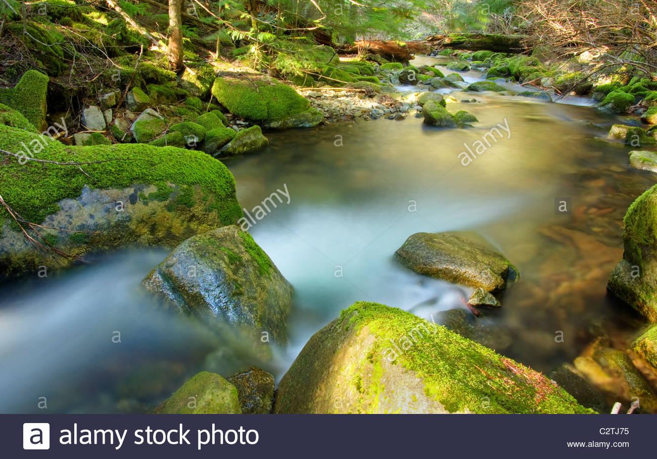 Idaho, Norden, Kootenai County. Beauty Creek fließt durch Moos bedeckt Felsbrocken in der Coeur d ' Alene Stockbild