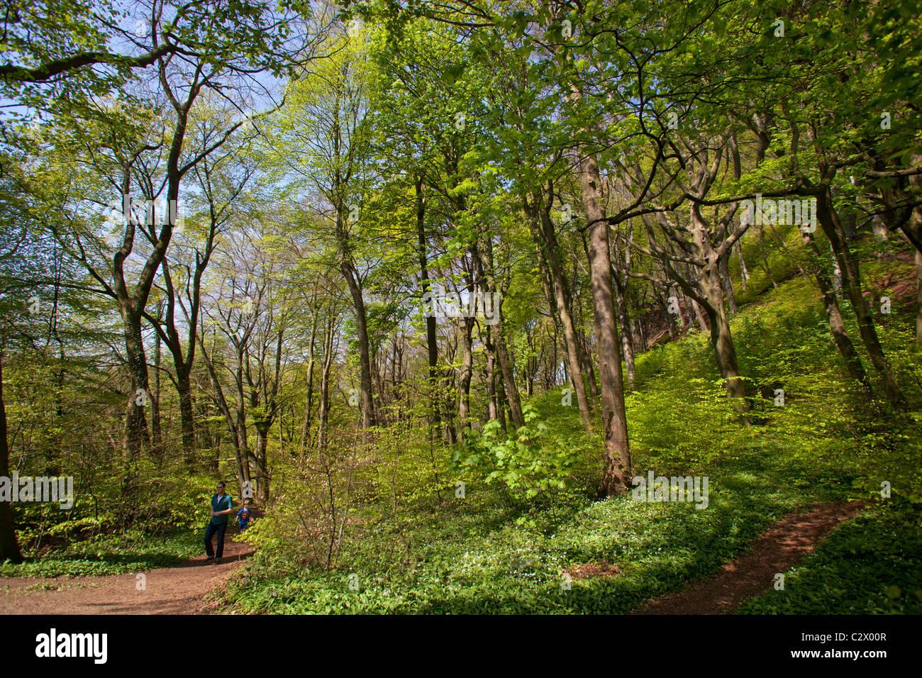 Mann zu Fuß durch den Wald Stockfoto