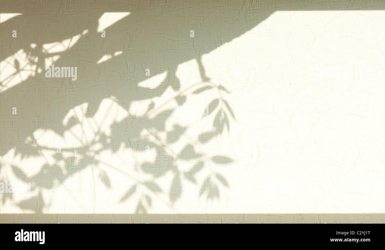 Schatten von Glyzinien auf einem blinden Fenster beleuchtet von der Sonne Stockfoto