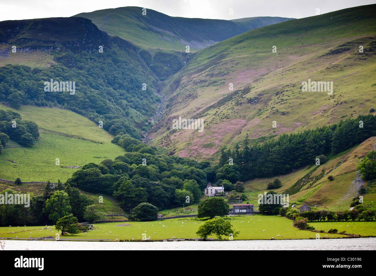 Bergbauernhof auf Berg Hänge im Tal-Y-LLyn, Snowdonia, Gwynned, Wales Stockbild