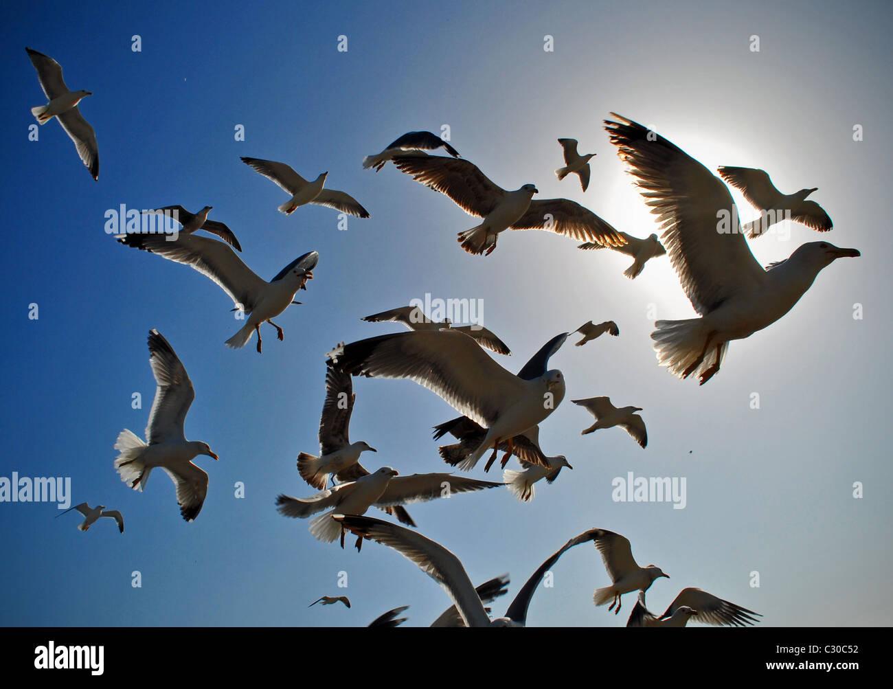 Herde von Möwen im Flug Stockbild