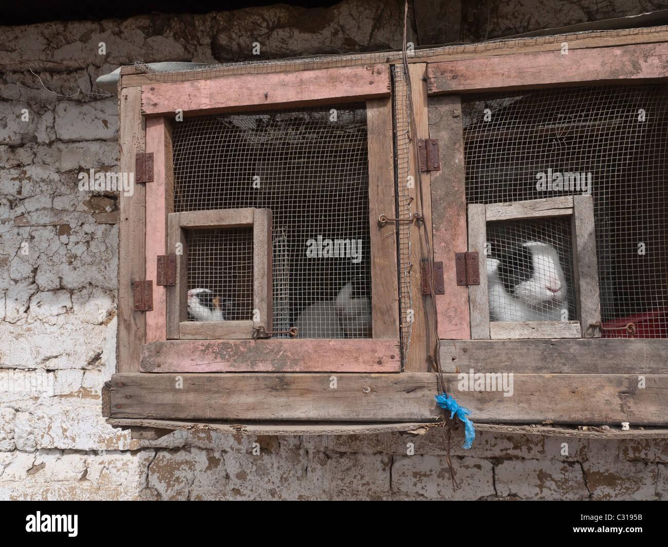 Ausgezeichnet Gebäude Draht Kaninchen Käfige Zeitgenössisch ...