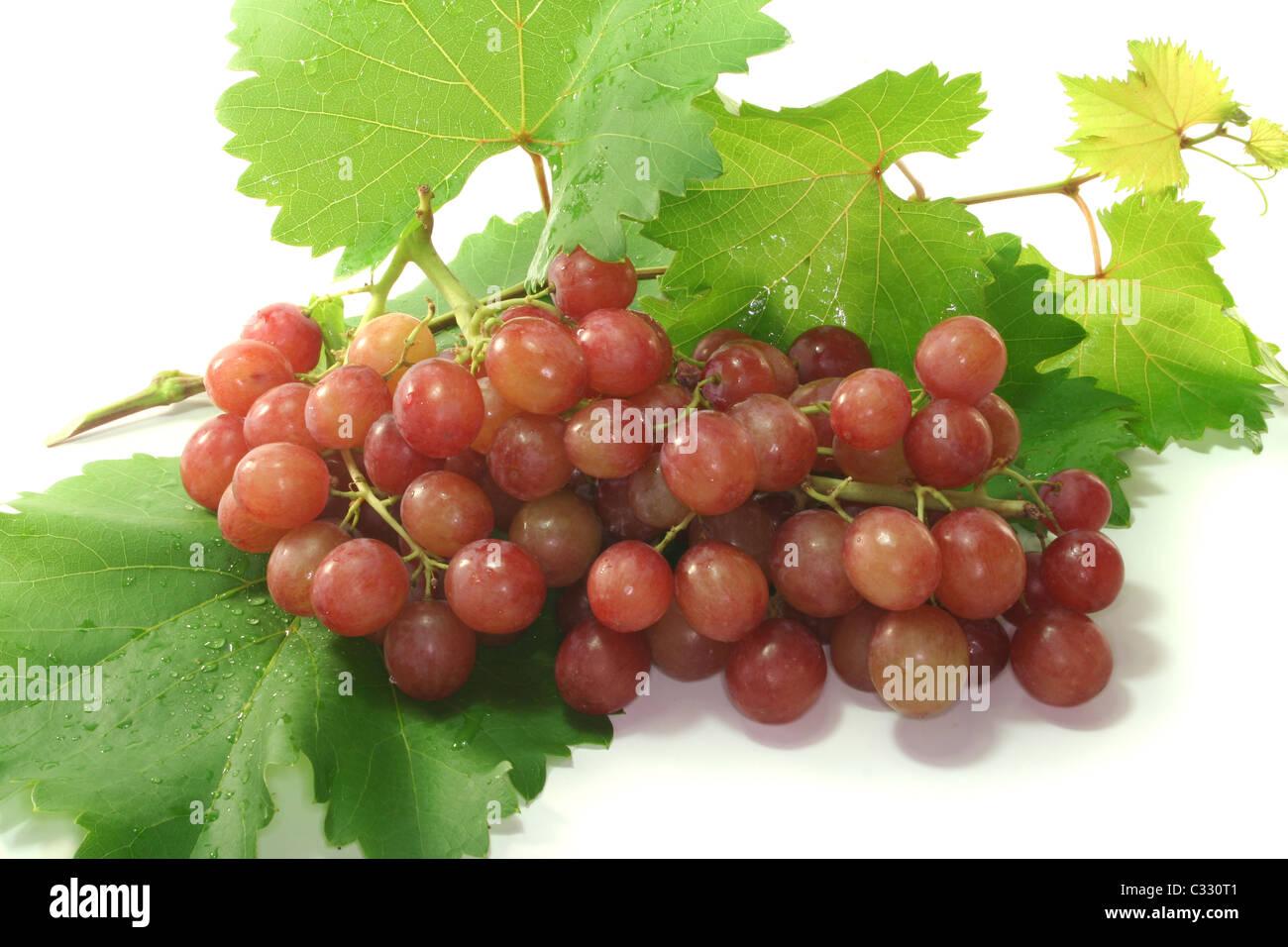 rote Trauben mit Ranke Ranke vor einem weißen Hintergrund Stockbild