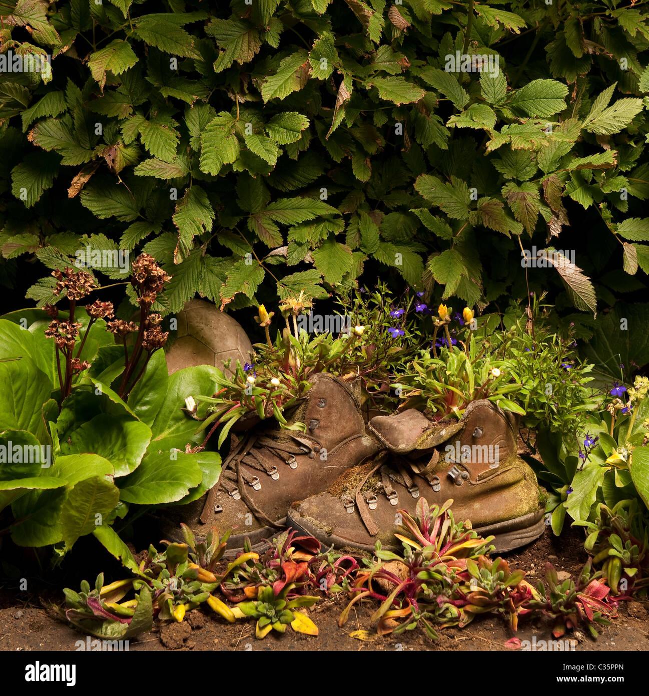 Stiefel Als Blumentöpfe Im Garten, Island
