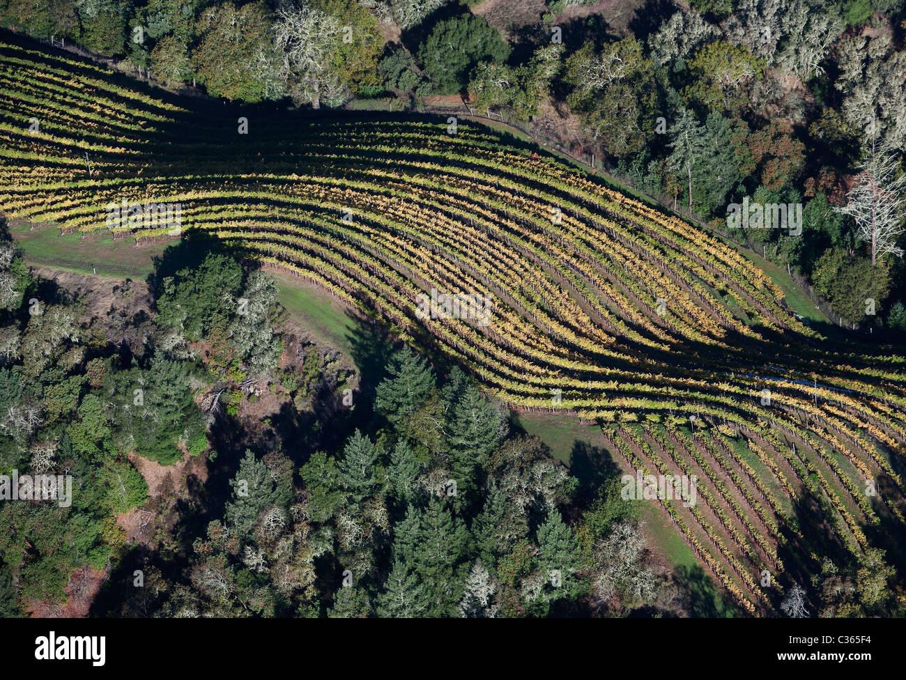 Luftaufnahme über Mountain Top Weinberg Zeilen Herbst Sonoma county Califonia Stockbild