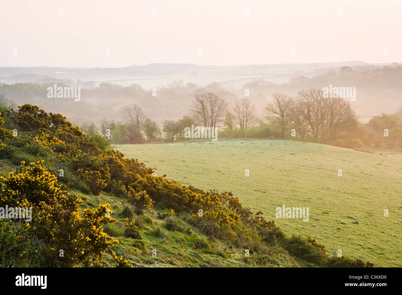 Misty Dawn im zeitigen Frühjahr in der Nähe von Corfe Castle Dorf, Dorset, Großbritannien Stockbild