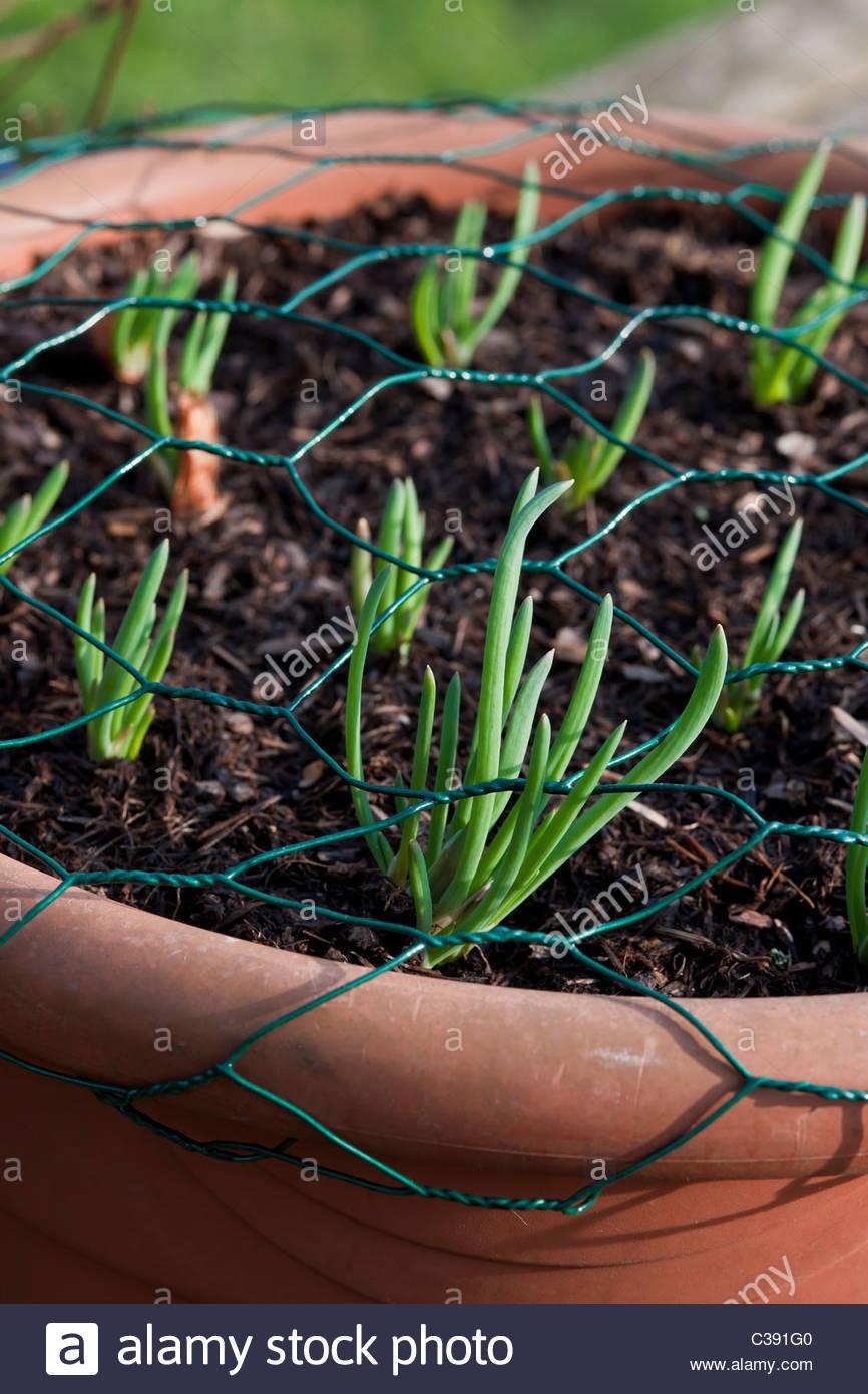 Garten Problem Lösung Schutz der Töpfe Oberfläche des Bodens von ...