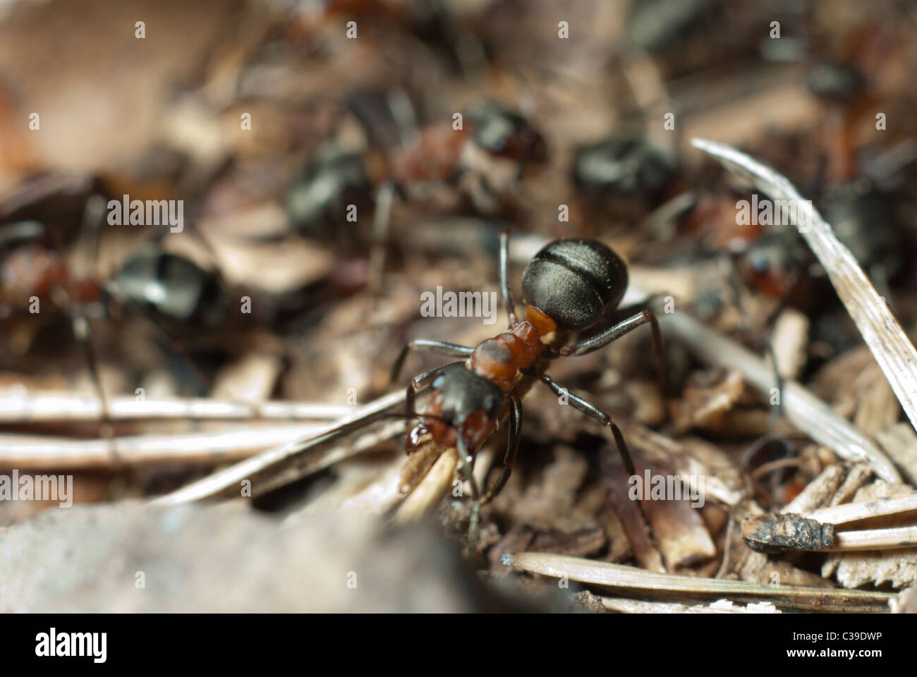 Die Ameisenkolonie Stockbild