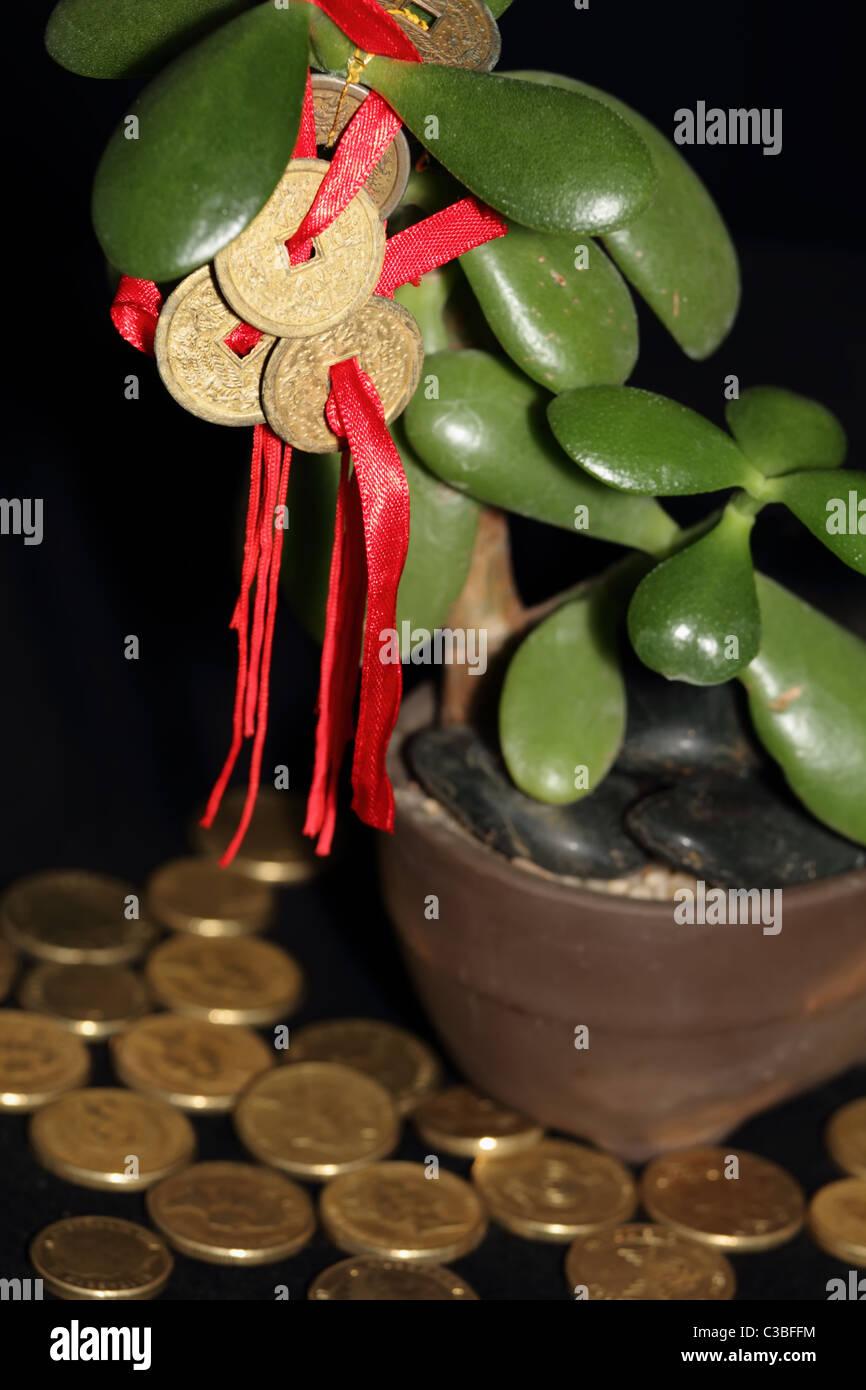 Feng Shui Münzen Auf Geldbaum Mit Goldmünzen Symbolisiert Erfolg Und