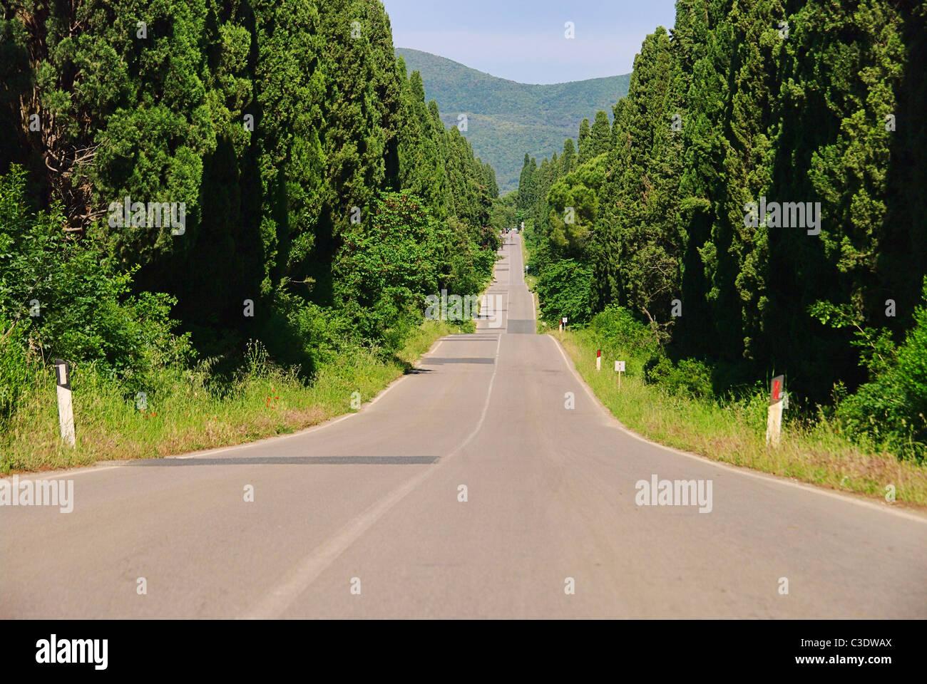 Zypressenallee Laengste saufen - längste Zypressenallee aus Italien 02 Stockbild