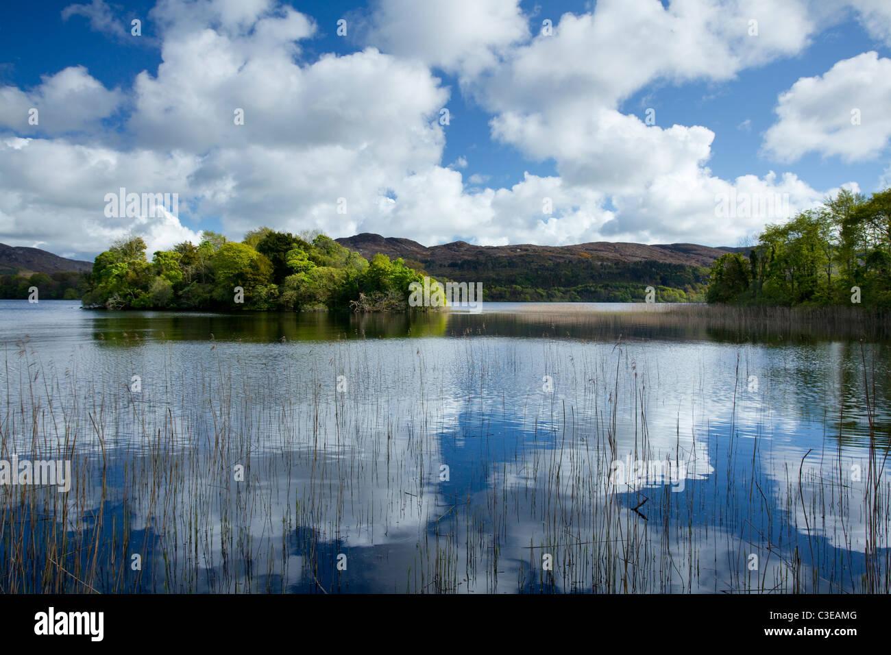Sommer Reflexionen, Lough Gill, County Sligo, Irland. Stockbild