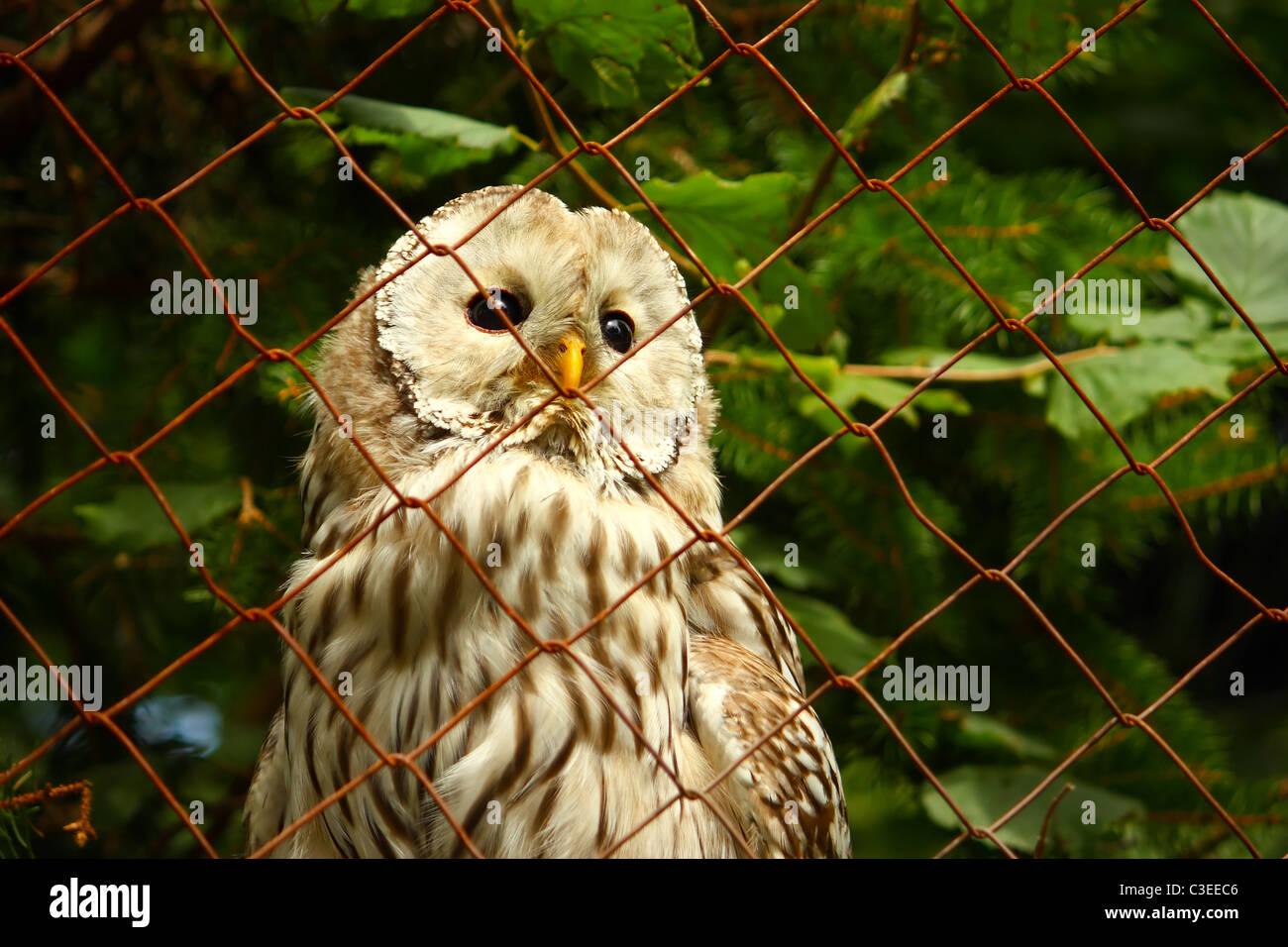 Eine Eule in einem Käfig im Zoo Blick durch das Drahtgeflecht ...