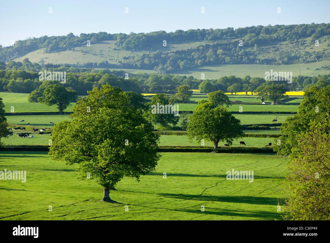 Blick auf Ackerland, Landschaft und der North Downs und Box Hill, Brockham, Surrey Hills, Surrey, England Stockbild