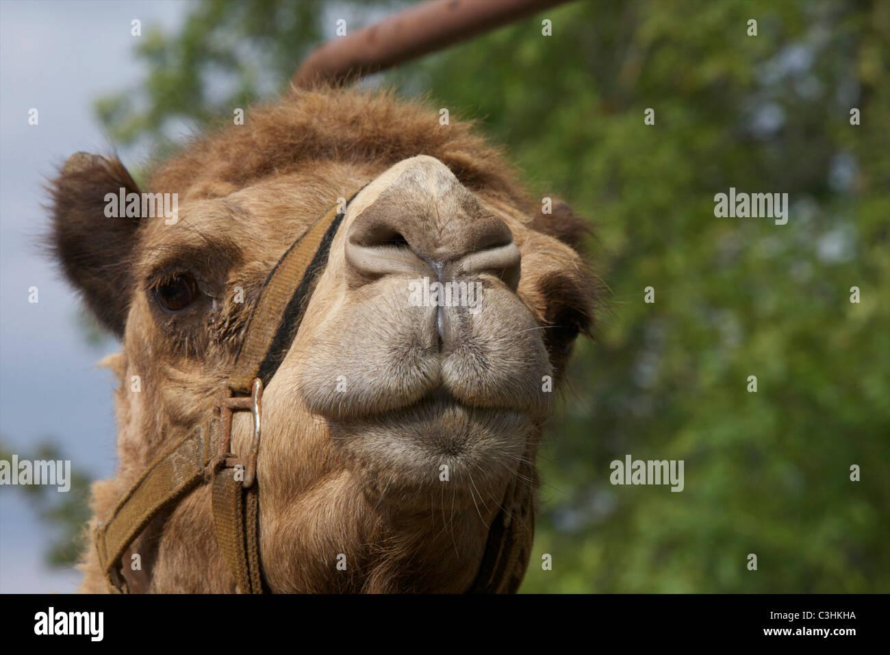 Upper Nose Stockfotos & Upper Nose Bilder - Seite 3 - Alamy