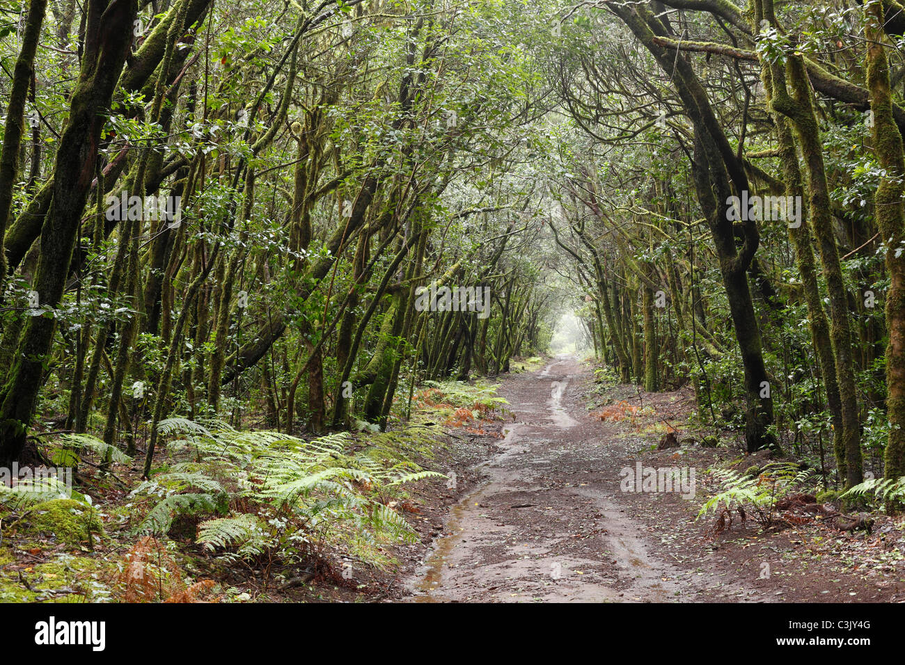 Spanien, Kanarische Inseln, La Gomera, Ansicht der Lorbeerwald Stockbild