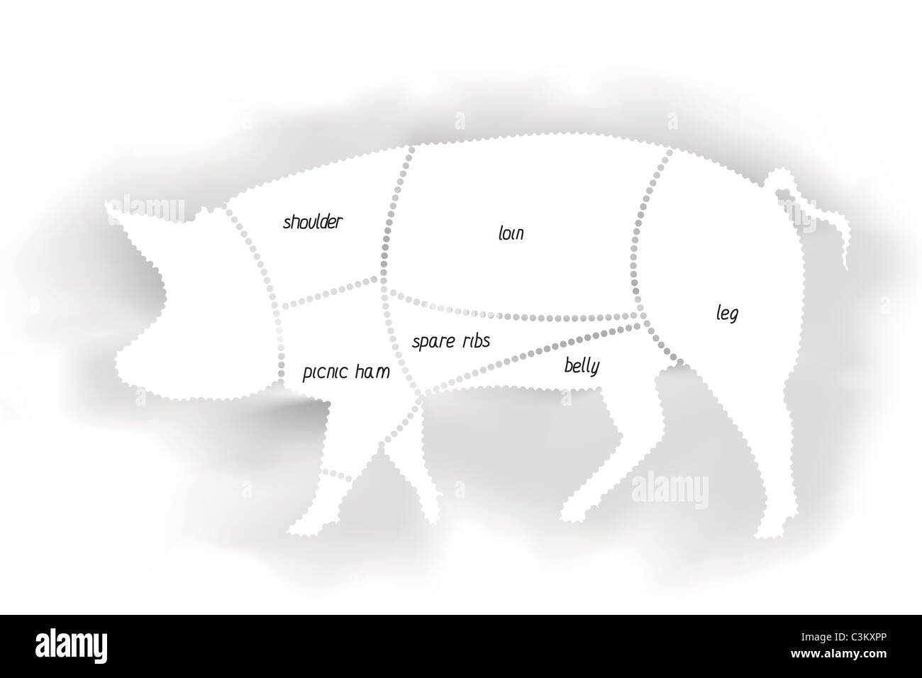 Schön Schweine äußere Anatomie Fotos - Anatomie Von Menschlichen ...