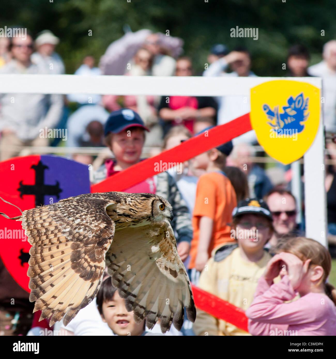 Ein Uhu fliegt in der Nähe von den Massen in einer Falknerei-Anzeige im Blenheim Palace in Oxfordshire, England. Stockbild