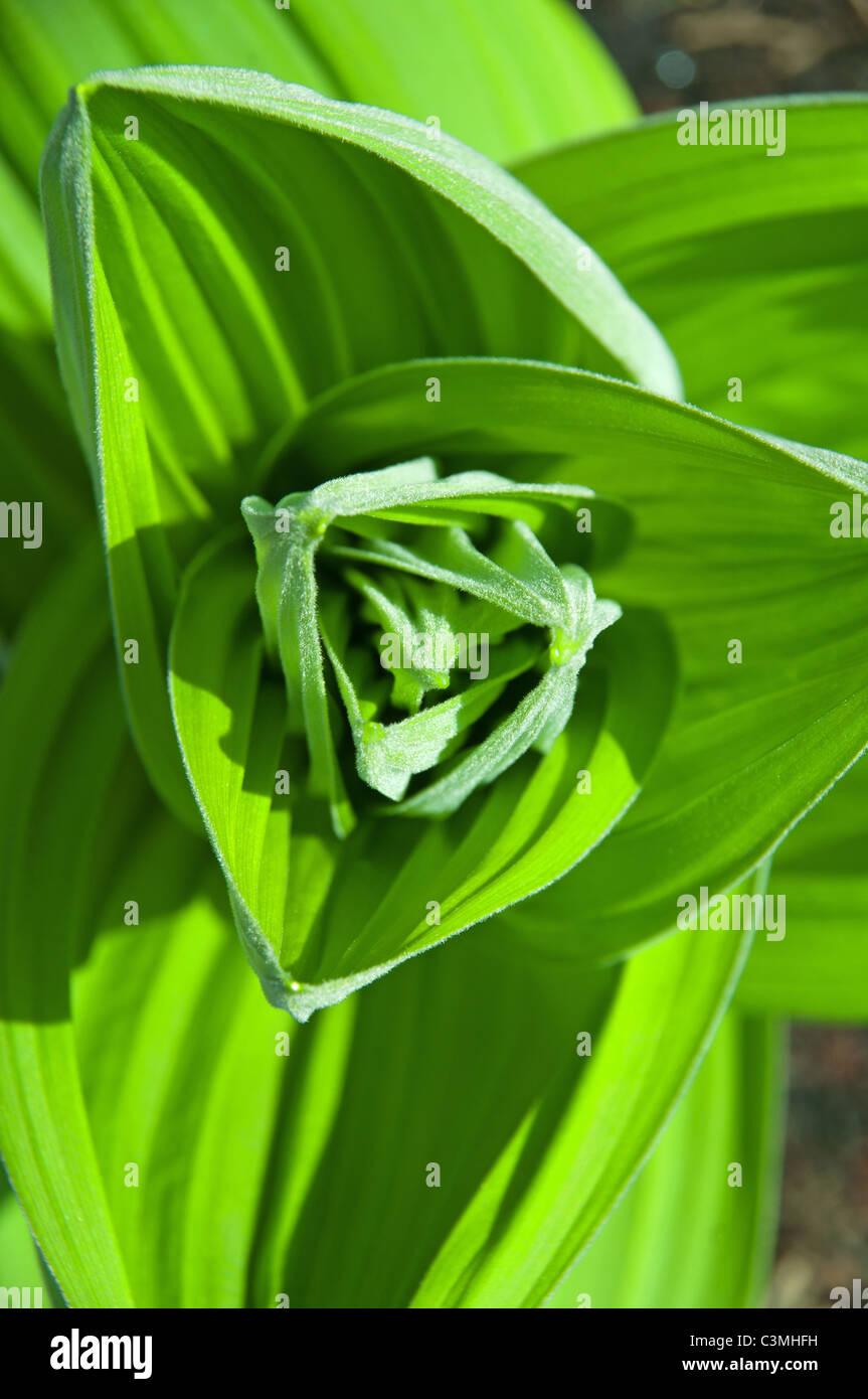 Pflanze Mit Großen Blättern grüne pflanze mit großen blättern auf der erde stockfoto bild