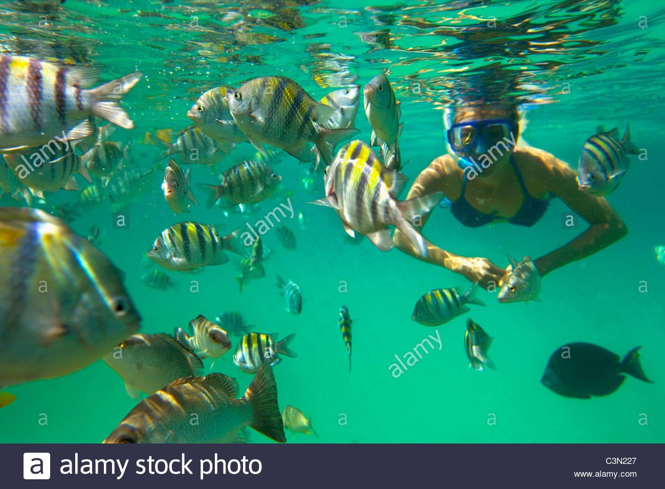 Mexiko, Quintana Roo, Xel-Ha Naturpark. Schnorcheln und Farbe Tourismus Tourist reisen Destinationfull Fisch. Stockbild