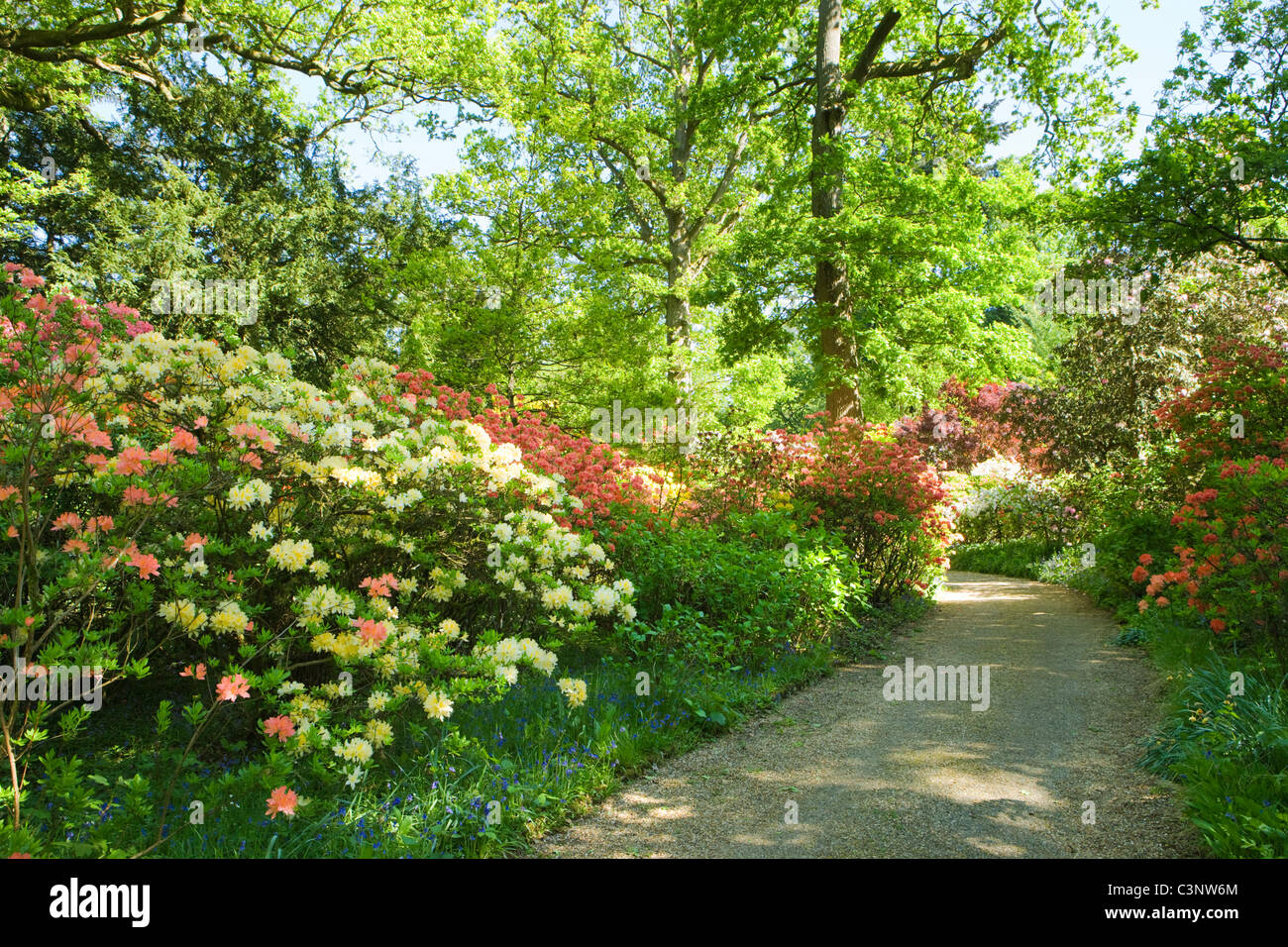 Garten mit Rhododendren, Coverwood Farm, Surrey, UK. Stockbild