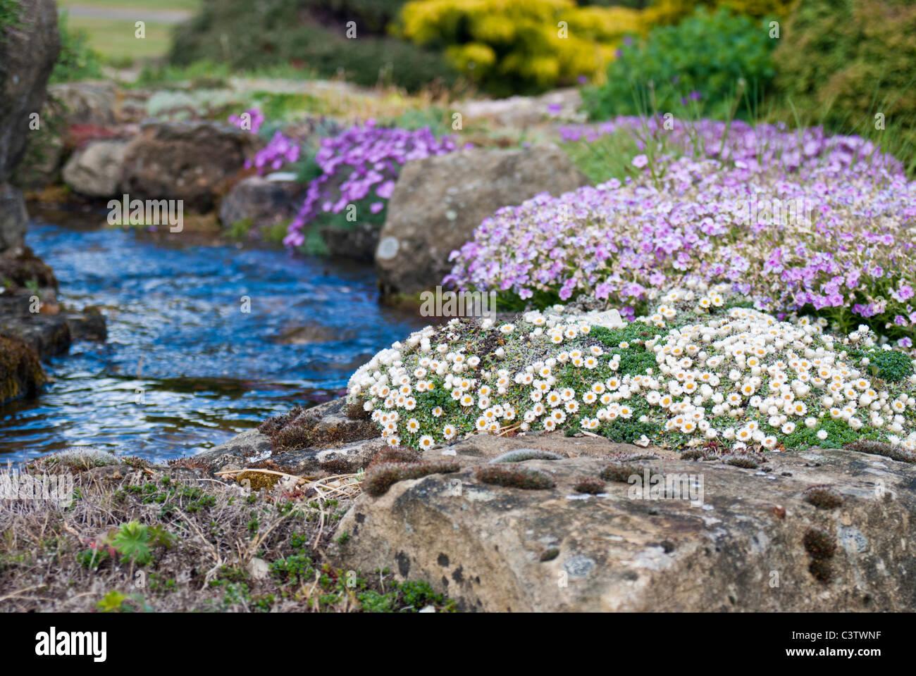 Alpine Steingarten mit Wasserspiel Stockfoto, Bild: 36811755 - Alamy