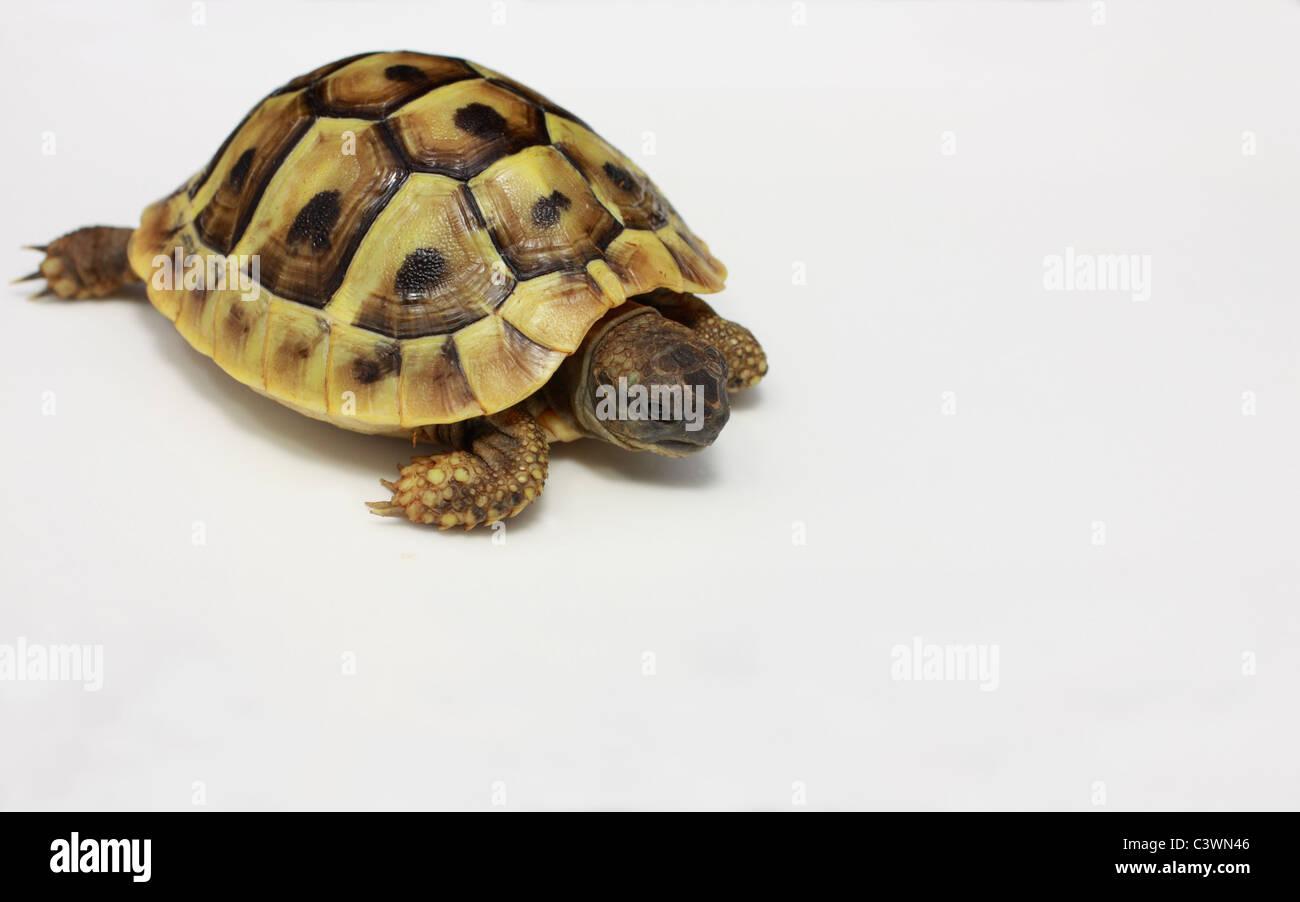 Atemberaubend Anatomie Der Schildkröte Galerie - Menschliche ...